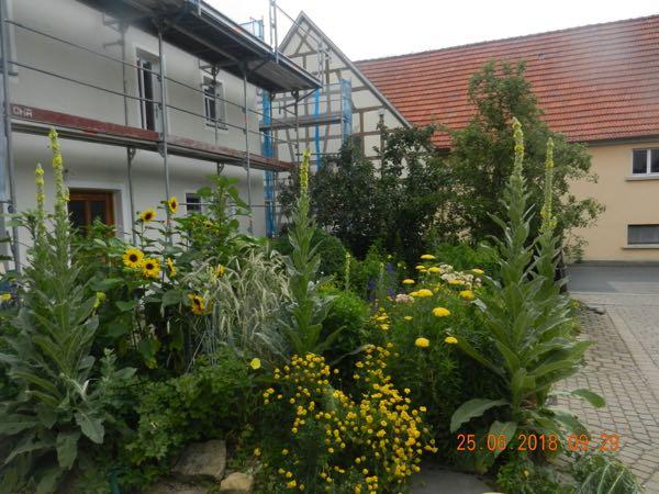 Eingerüstete Fassade des Hauses mit Pflanzen im Vordergrund